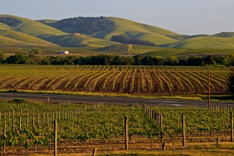 bigstock-Napa-Valley-vineyard-at-sunset-18701555
